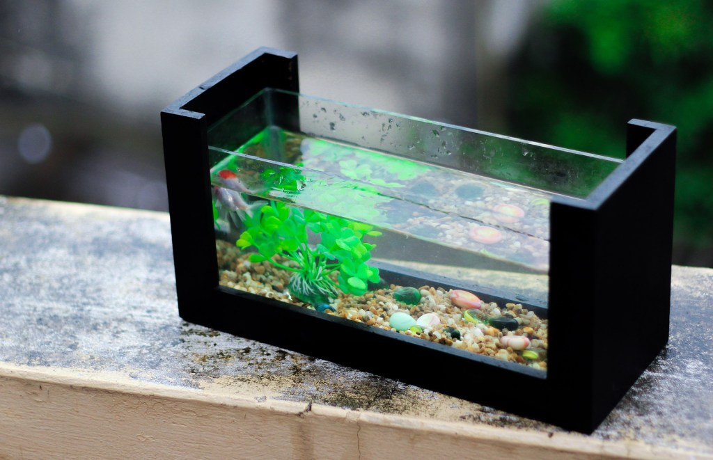 7 Jenis Ikan Hias Air Tawar Tercantik dan Paling Diminati