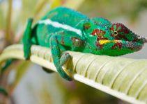 Reptil Peliharaan