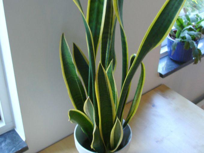 worldofsucculents.com