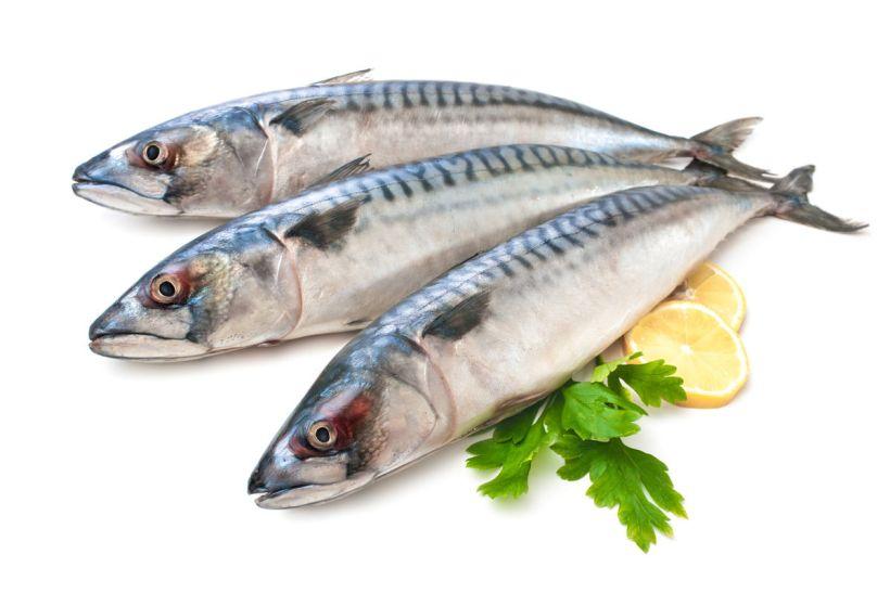 Jenis Ikan Laut - Ikan Tenggiri