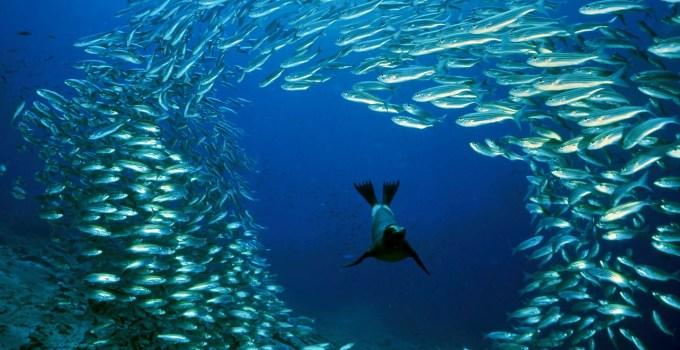 Jenis Jenis Ikan Laut Paling Lezat