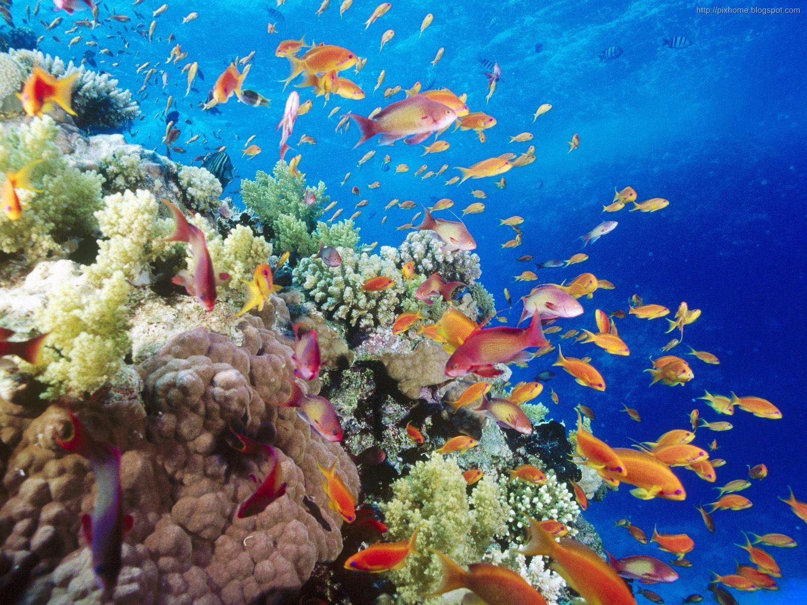 78 Gambar Hewan Laut Beserta Penjelasannya HD Terbaru