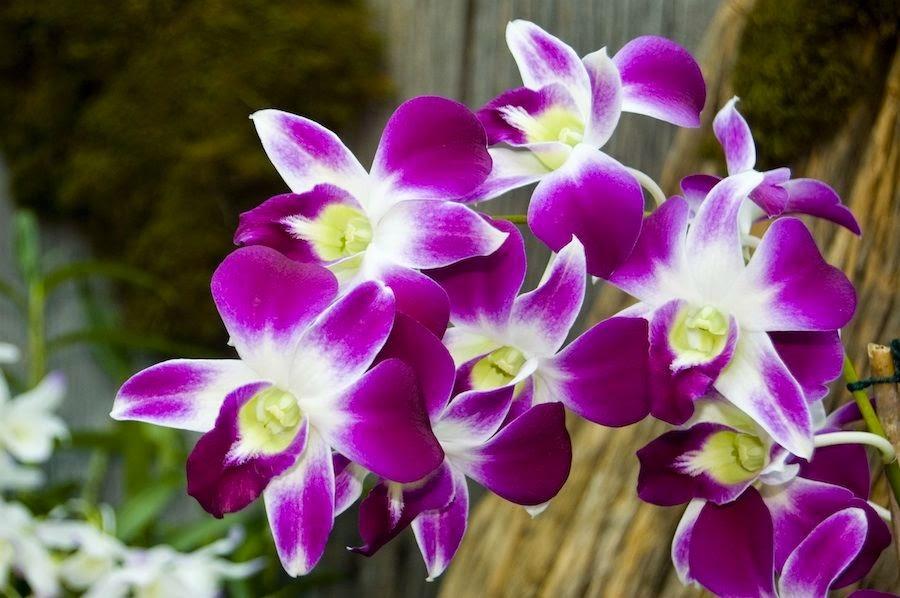 Gambar Jenis jenis Bunga Terindah Dari Berbagai Penjuru