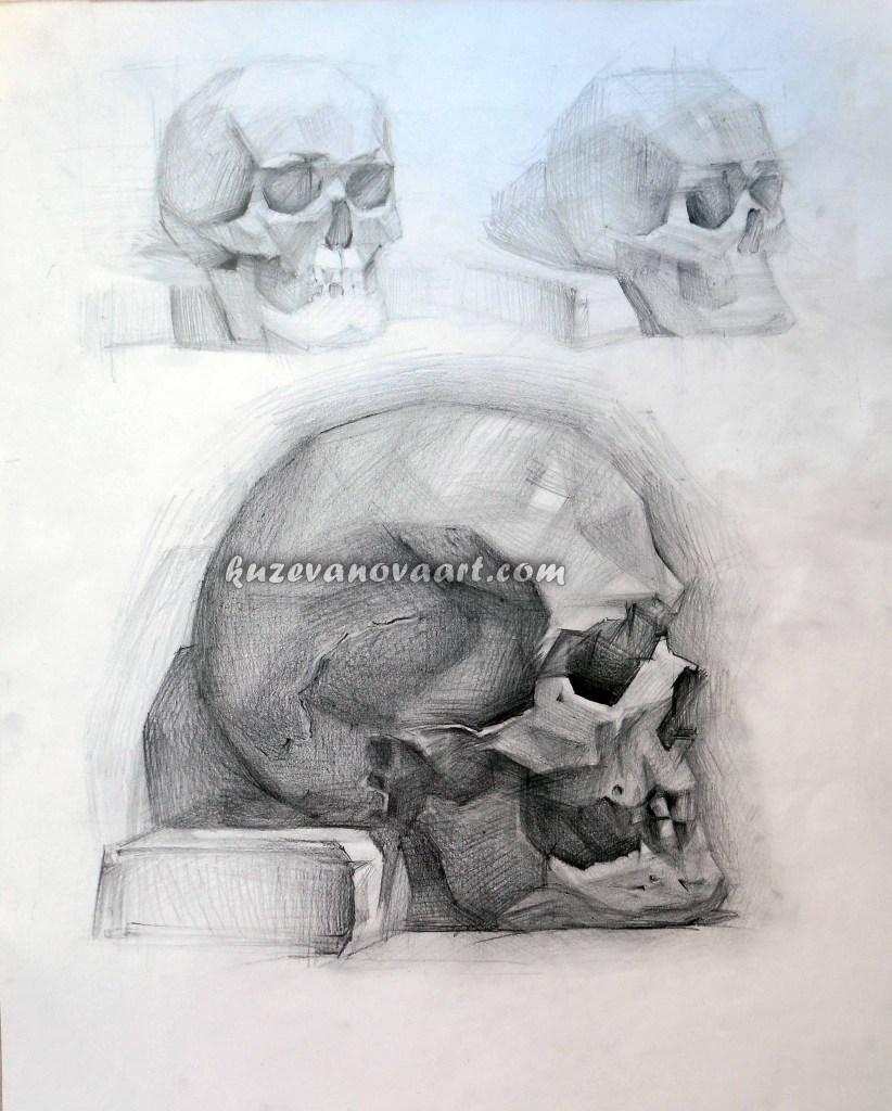 Educational work. Skull.