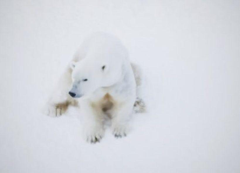 Lapland da Yapılacak En İyi 5 Şey