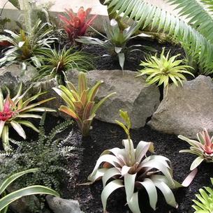 Pina Plantas De Bromelia De Interior Y Sus Fotos