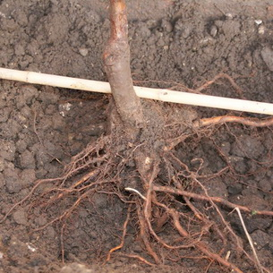 Как ухаживать за почвой на участке