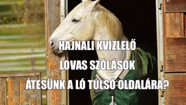 lovas-szólások kvíze