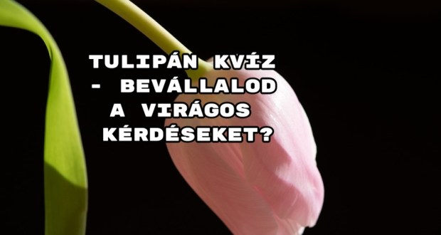 Tulipán kvíz - bevállalod a virágos kérdéseket?