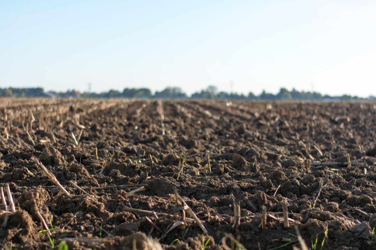 Jak odrolnić działkę rolną? Ile to kosztuje i jak wygląda procedura?