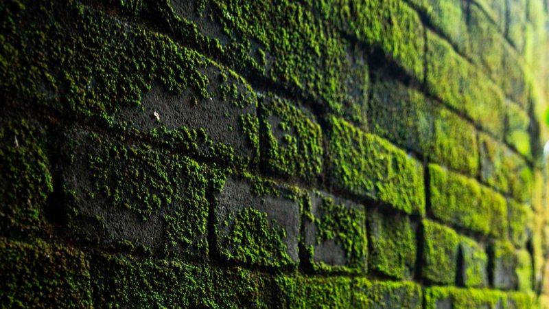 Co zamiast farby na ścianie? Alternatywy dekoracji ściennych.