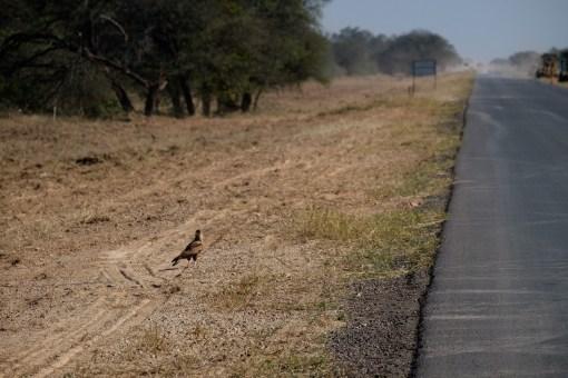 Najczęściej towarzyszyły nam ptaki drapieżne