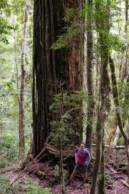 To są dopiero wielkie drzewa, wyższe nawet od nas!