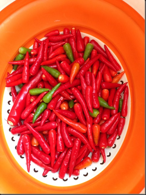Burnt, Hot, Spicy– I am running away!!!– Understanding Chilli Pepper and Making Of Chilli Sauce