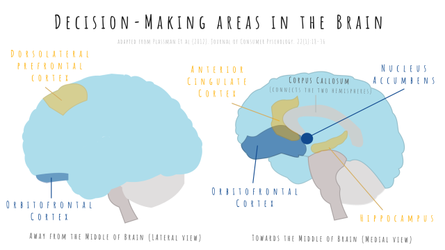 Maps of the brain areas involved in decision