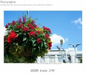 マップカメラ | KASYAPA | 243:α7シリーズ待望のプラナーレンズ『ZEISS Loxia50mm』