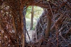 TreeReeds