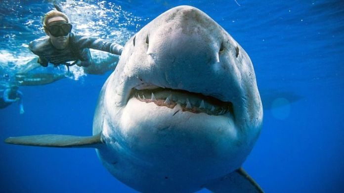 Shark DNA could help cure cancer in humans