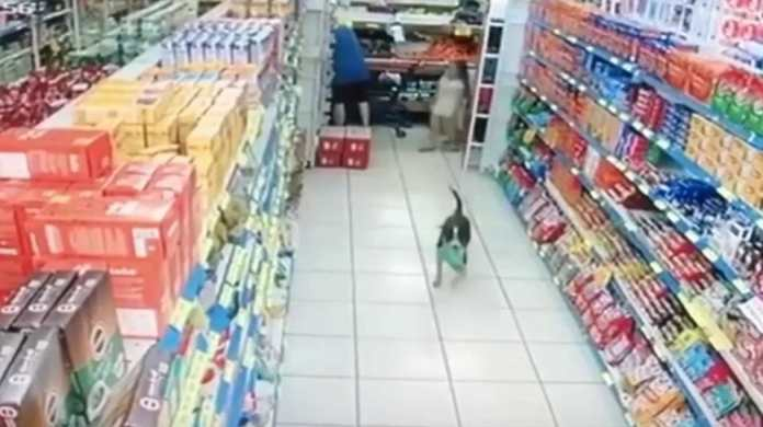 In Brazil; Dog walks into a supermarket robs and easily step away
