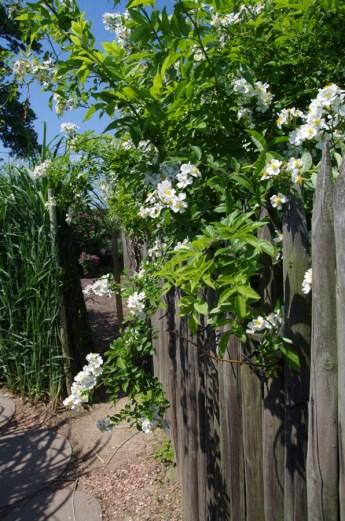 Ogrody Kapias Goczałkowice - wiejskie klimaty