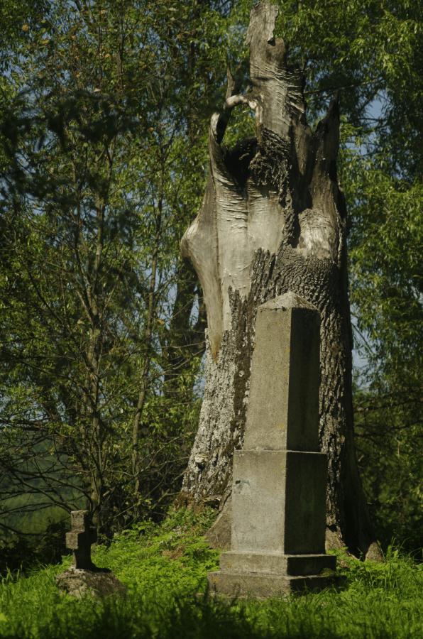 Bieszczadzkie cmentarze - stary cmentarny dąb