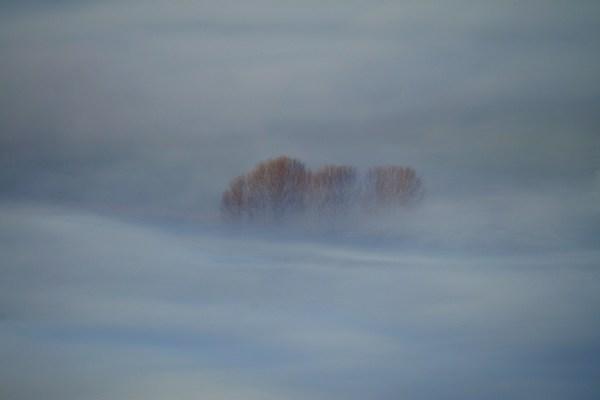 wilkanowski drzewa we mgle