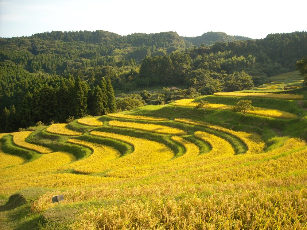 Must-see rice field terrace (1/6)