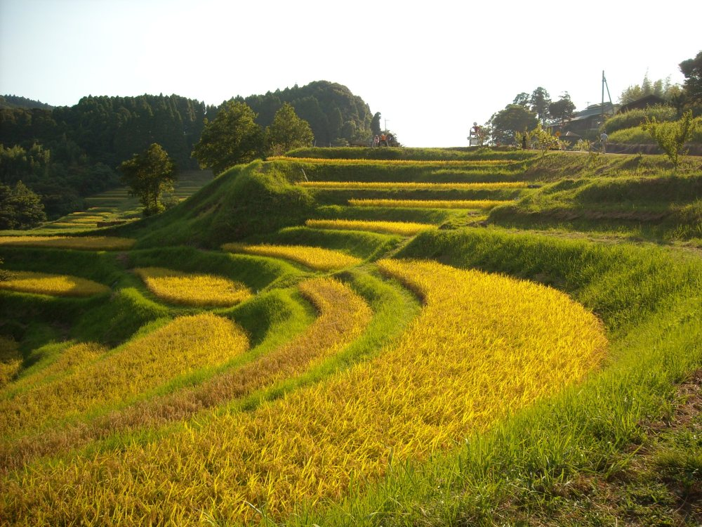Must-see rice field terrace (3/6)