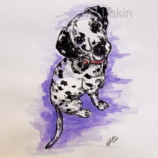 """""""Dalmation"""", 2014. 7x7inches, Pen and ink on paper."""