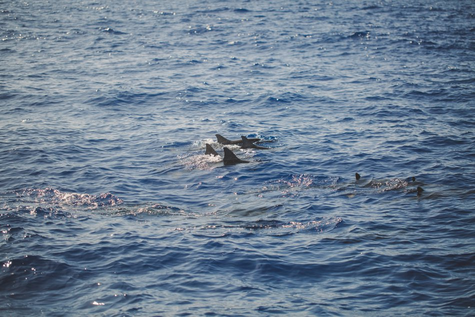 Kylee Ann Photography Napali Coast Tour Pictures Dolphins2