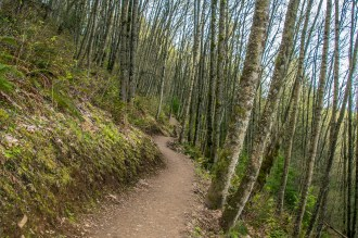 Typical view of the trail