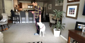 Human using leash on dog inside house .
