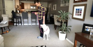 Human showing dog around new home on a leash.