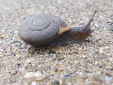 Speedy, the snail