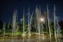 Trees that grew too near to the geothermal features of Geyser Basin back lit by the full moon and light painted with my LED flashlight