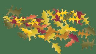 LeafCluster1