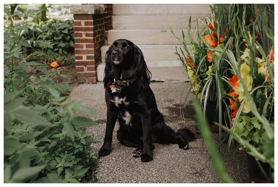 Champaign Wedding Dog Ringbearer