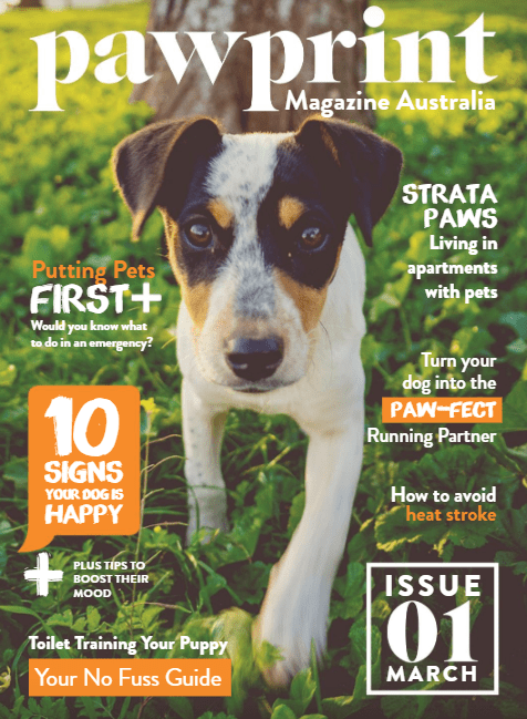 Kylie Mcc Writing Feature Article Pawprint Magazine