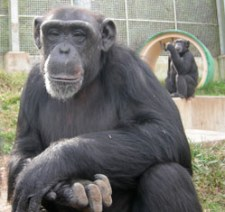 Primate Rescue Center Nicholasville KY