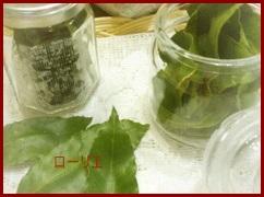 kannmuri ローリエの葉を乾燥させて カレーレシピなどに使う方法
