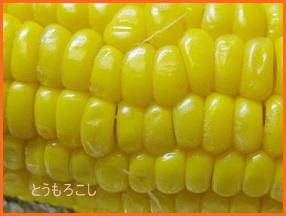 toumoro610-1-226x300 とうもろこし茹で方 色々 人気の食べ方