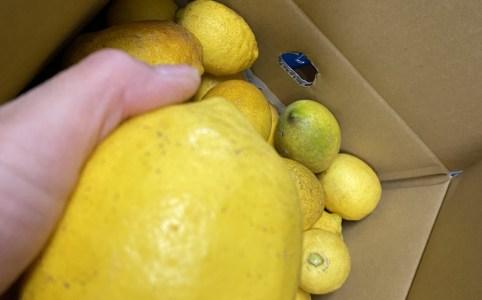 生口島の檸檬