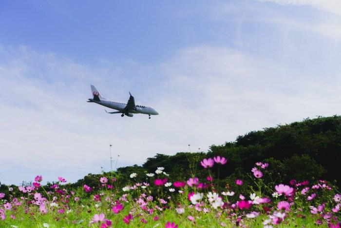 空港公園とコスモス畑
