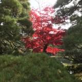 日本に、京都があってよかった?