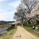 北山通、賀茂川の桜と『阪急阪神不動産』の新築分譲マンション計画地