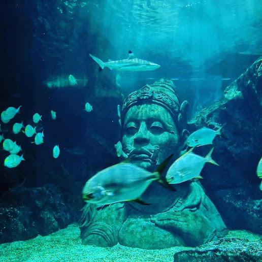 【バンコクショッピングモールの地下にある水族館】Sea Life Bankok Ocean World(シーライフバンコクオーシャンワールド)