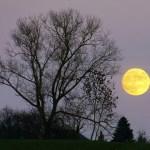 1/31 満月の光りを吸収してすべてのものを豊かに大きく育てる女性になりたいね