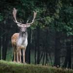 6/23 運命に流されるまま 使者の鹿に先導されるままに