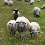 9/16 純粋な奉仕精神あふれる仕事人になれば羊たちが集まってくる