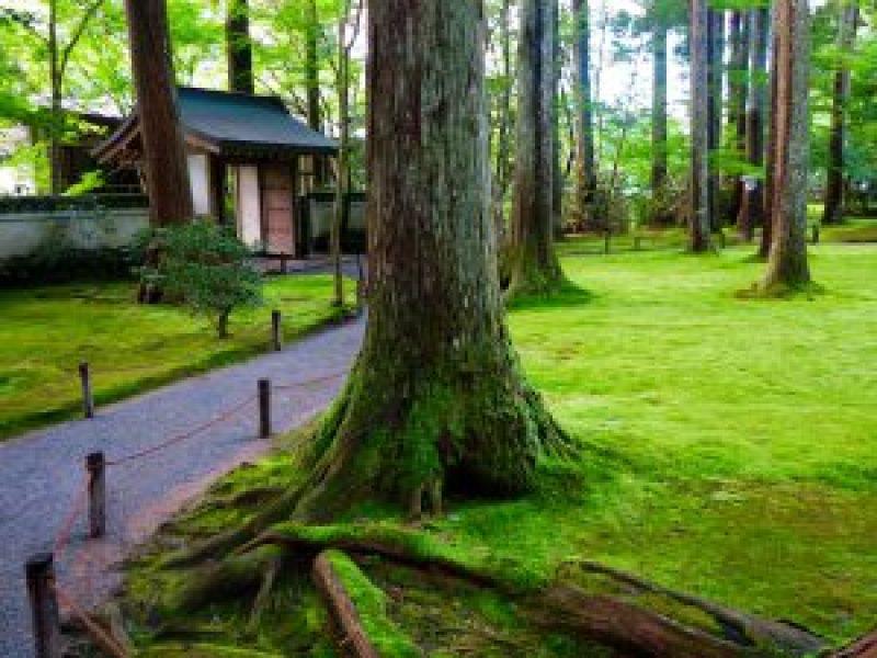 京都大原三千院木々